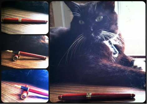 pen cat